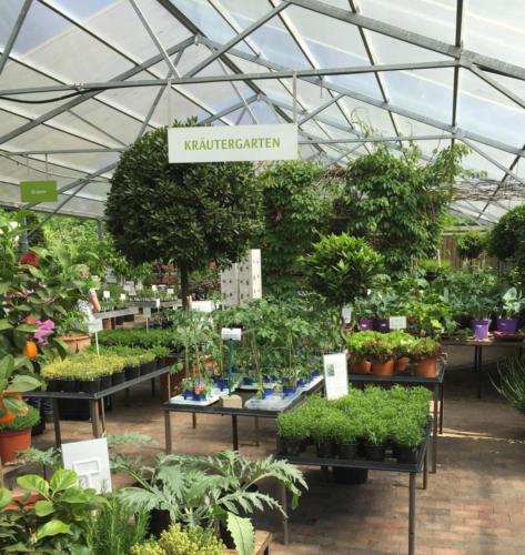 Kräutergarten_Tomatenpflanzen_Green-Haus_Detmold